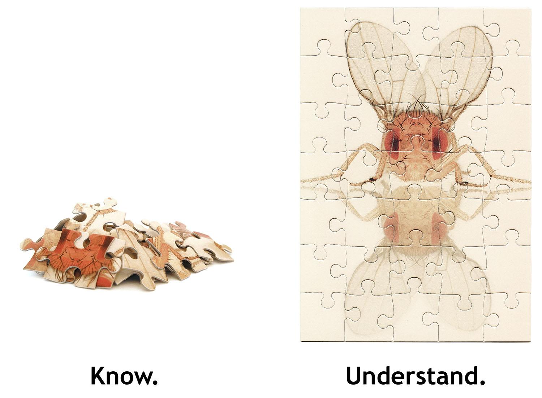 Know-Understand